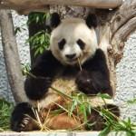 パンダもいるよ!神戸市立王子動物園に行って良かったこと5つ