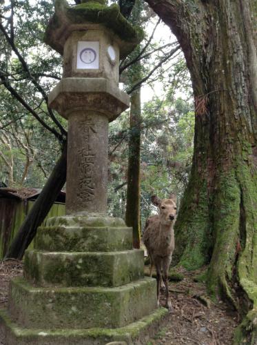 春日大社燈籠と鹿