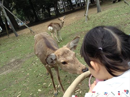 奈良で鹿に会いに行こう