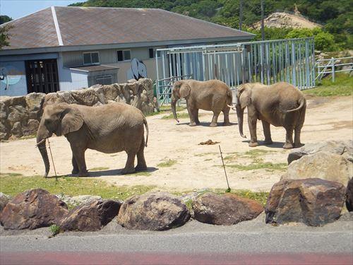 ケニア号から。ゾウ