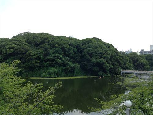 大阪市立美術館横の茶臼山 大阪市立美術館の横にある茶臼山。   こども展が開催されている大阪市立