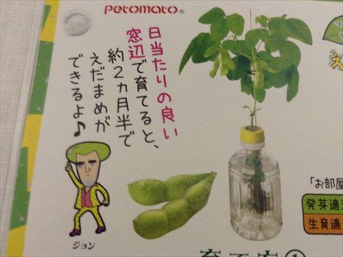 ペットマト枝豆を育てます