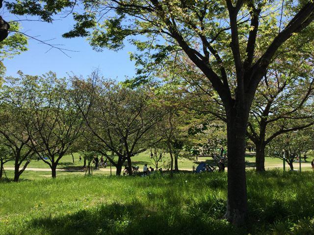 「八幡屋公園」芝生広場で休憩