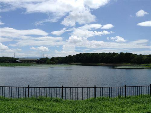 大泉緑地・大泉池の北側から