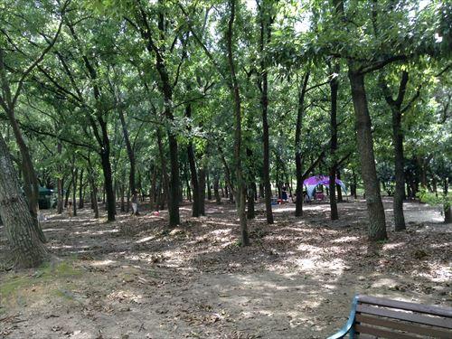 大泉緑地・キャンプエリア
