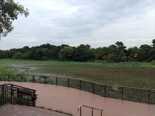 服部緑地・こどもの楽園・池