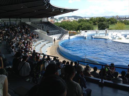 京都水族館・イルカショー(屋根付きイルカスタジアム)