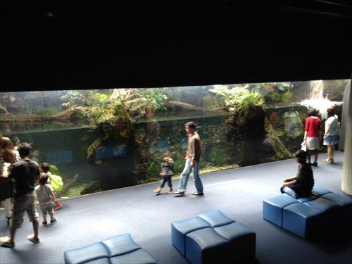 京都水族館・鴨川に生息する魚たち