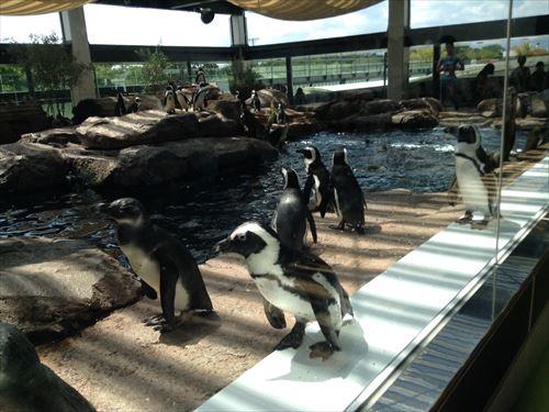 京都水族館・ペンギン