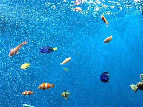 京都水族館・熱帯魚&深海魚