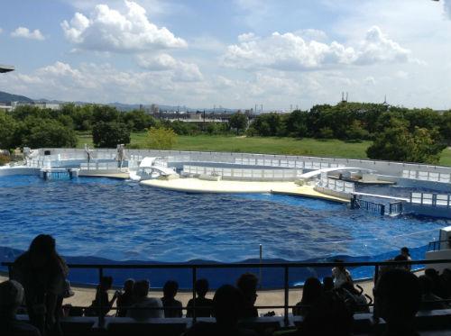 京都水族館・イルカショー