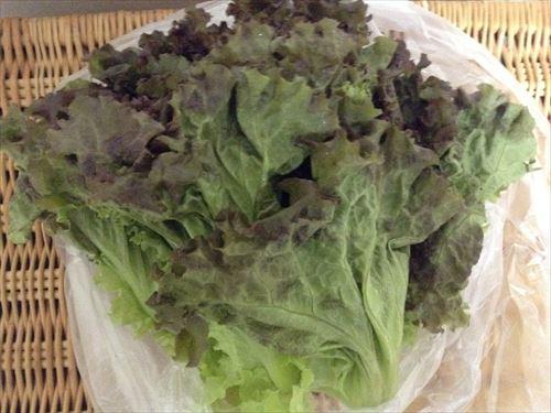 ビオマルシェの多菜セット③レタス