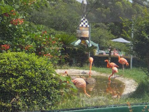 みさき公園・動物園・フラミンゴ