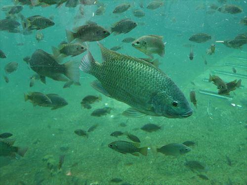 天王寺動物園の魚