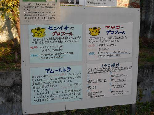 天王寺動物園のトラ・名前はセンイチ