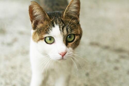 猫の決定的瞬間を撮影