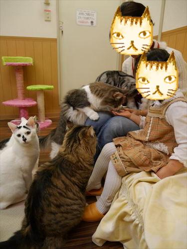 堺東駅・猫カフェ「ゆる猫」ネコに餌をあげる様子