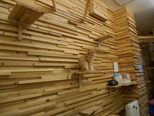 堺東駅・猫カフェ「ゆる猫のネコ