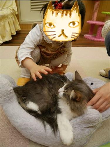 堺東駅・猫カフェ「ゆる猫」猫に触る子供