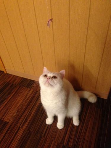 堺東駅・猫カフェ「ゆる猫」猫じゃらし・猫用おもちゃ