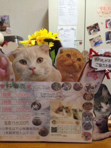 堺東駅の猫カフェ「ゆる猫」料金
