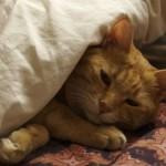 羽毛布団で朝まで快眠の様子