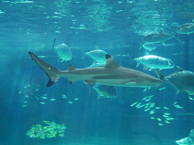 神戸市立須磨海浜水族園の生き物やアトラクション