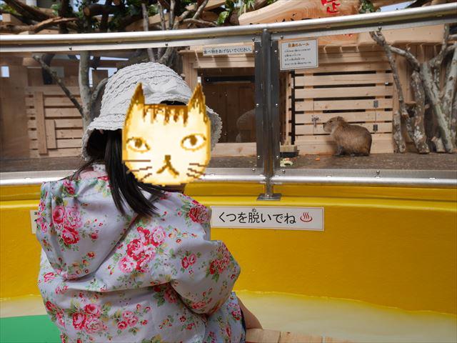 「カピバラと足湯」須磨海浜水族園