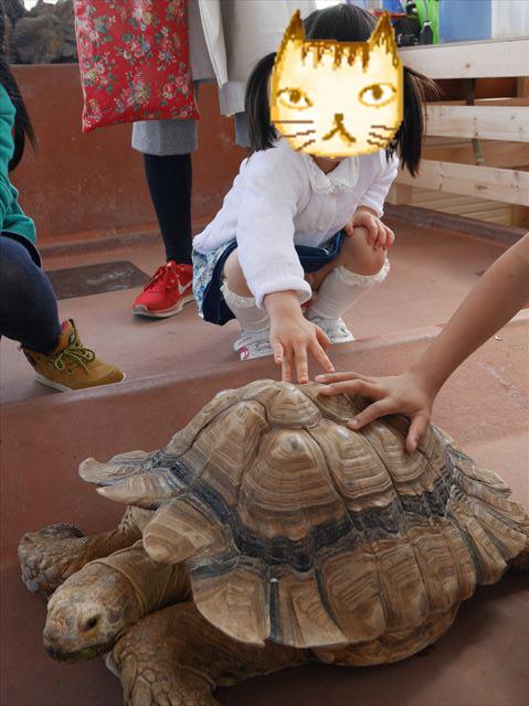 リクガメと触れ合える亀山・須磨海浜水族園