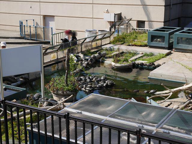 亀楽園・須磨海浜水族園