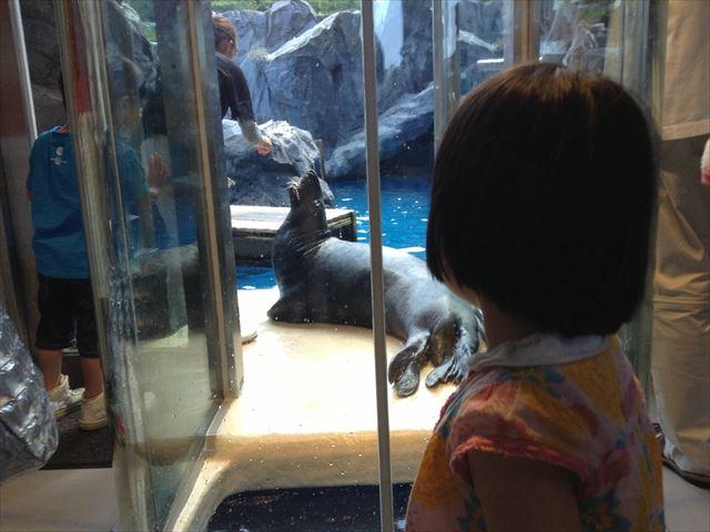 鳥羽水族館、アザラシを見る子供の様子