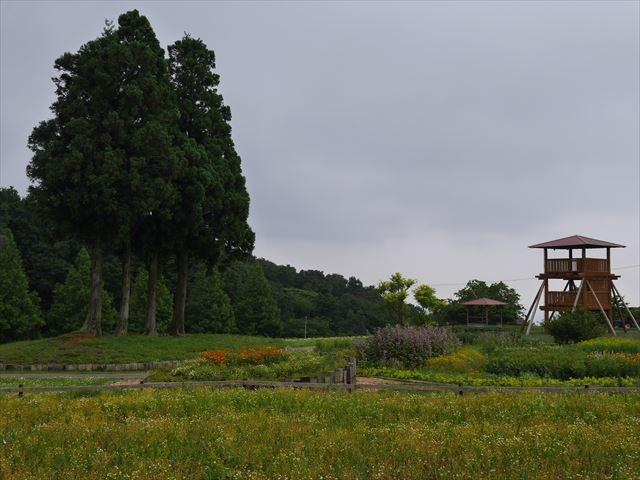 メナード青山リゾートのハーブガーデン「ラベンダーフェスタ」の様子・展望台と4本の木