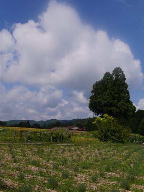 メナード青山リゾートのハーブガーデン「ラベンダーフェスタ」夏の雲