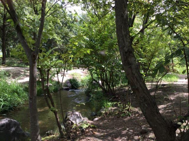 緑のせせらぎ・鶴見緑地公園