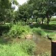 緑のせせらぎ周辺の様子。鶴見緑地公園