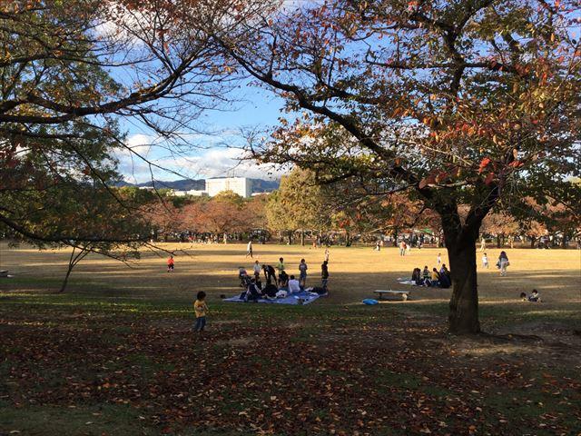 万博記念公園、子供の遊具公園「やったねの木」芝生公園