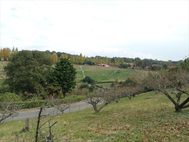 「ハーベストの丘」村のエリア