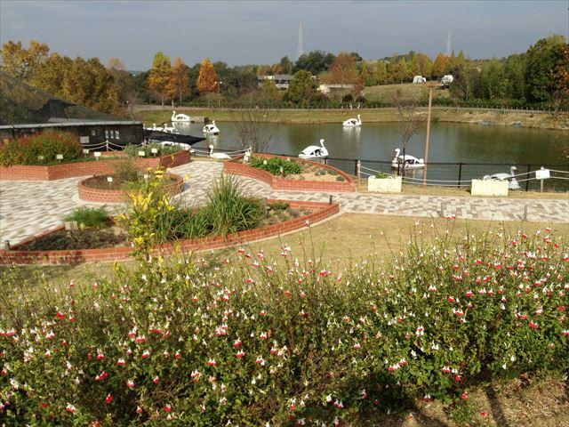 「ハーベストの丘」ボート池