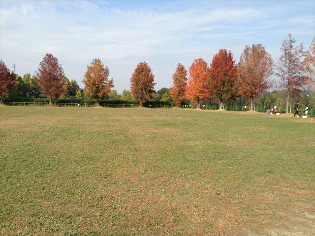 「ハーベストの丘」村のエリアの芝生