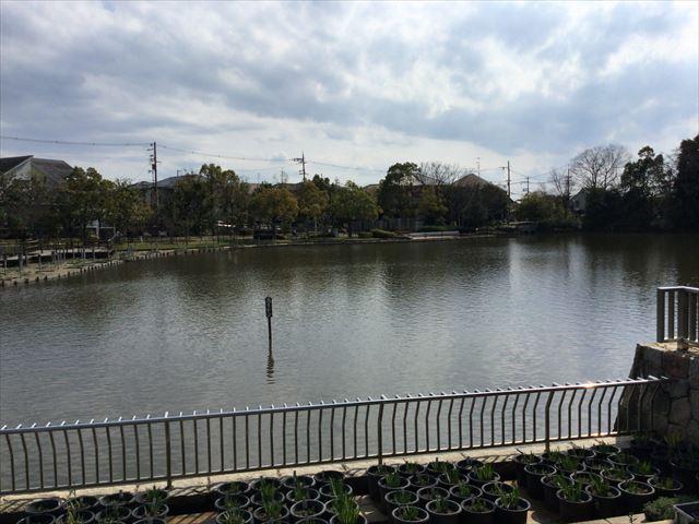 枚方市楠葉「市民の森」池