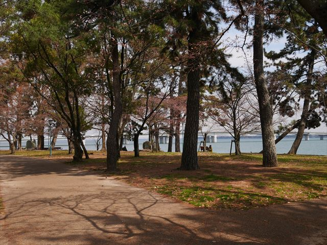 膳所城跡公園からの琵琶湖と桜