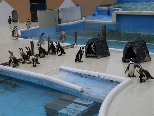 「志摩マリンランド」ペンギン