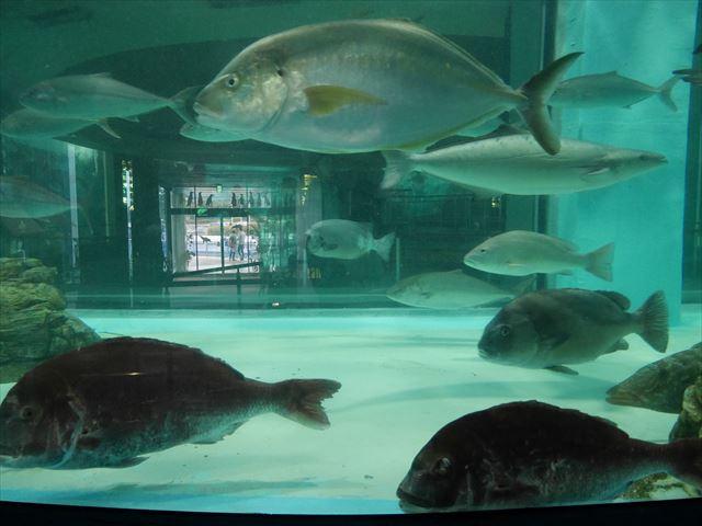 「志摩マリンランド」泳ぐ魚たち