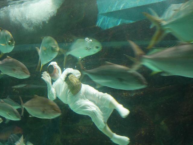 「志摩マリンランド」海人の餌付け