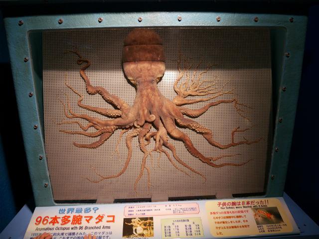 「志摩マリンランド」96本足のタコ