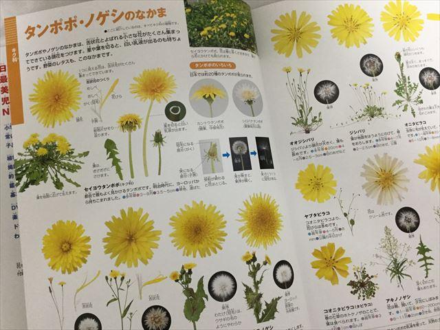「小学館の図鑑NEO」花(DVDつき)タンポポ
