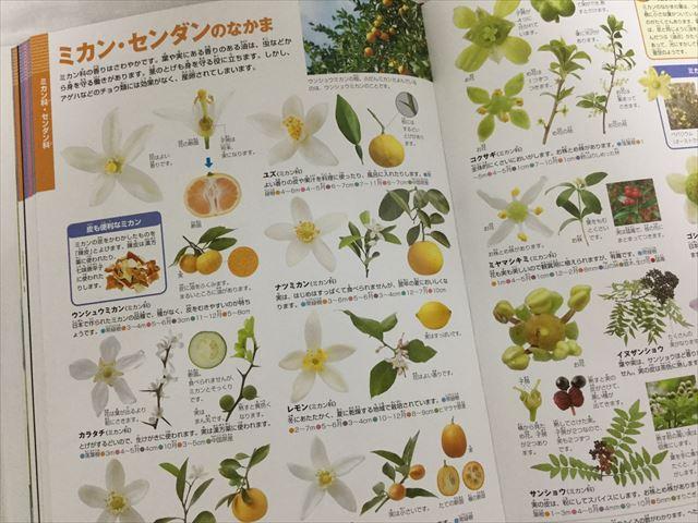 「小学館の図鑑NEO」花(DVDつき)、ミカン