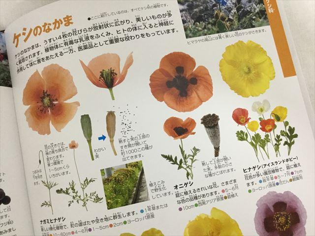 「小学館の図鑑NEO」花(DVDつき)、ケシの仲間