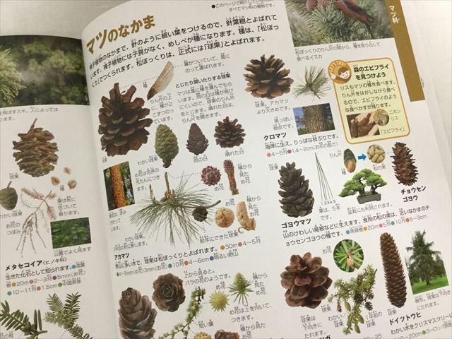 「小学館の図鑑NEO」花(DVDつき)、まつぼっくり