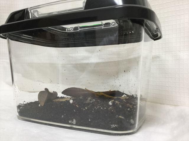 ダンゴムシを飼っている「飼育ケース」